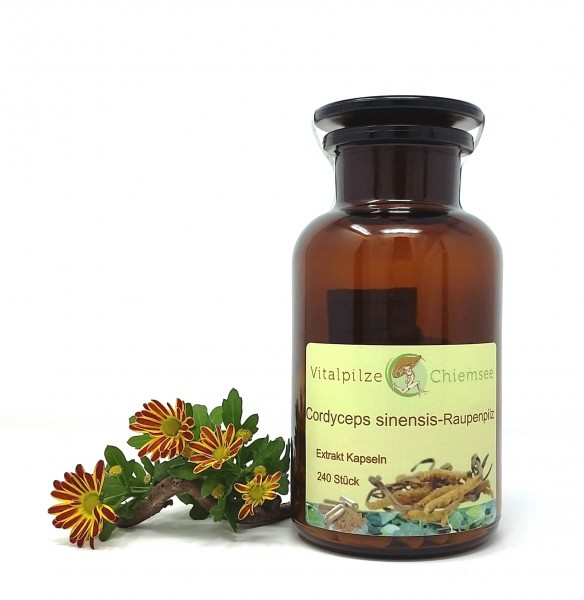 Cordyceps sinensis Extrakt Kapseln 240 im Glas