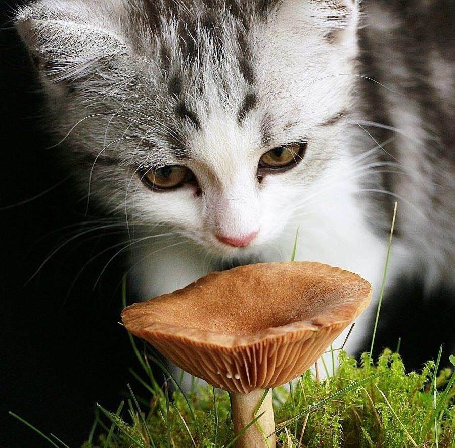 Vitalpilze für Katzen
